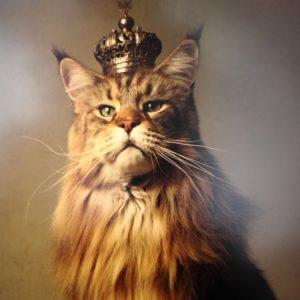 si-pisicul-ajunge-imparat_1beadd07756a43